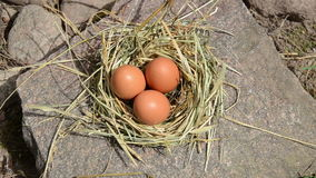Hand gather egg nest Royalty Free Stock Image