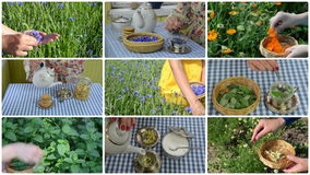 Hand gather herb and make herbal tea. Clips collage. Hands gather herb flowers plants and make herbal tea. Alternative medicine. Montage of fade in video clips stock video