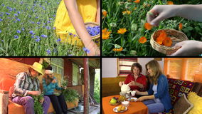 Hand gather herbs and women drink herbal tea. Clips collage. stock video
