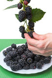 Hand gathering blackberries Royalty Free Stock Images