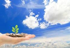 Hand, geld en groen jong boompje met blauwe hemel en cl Stock Afbeeldingen