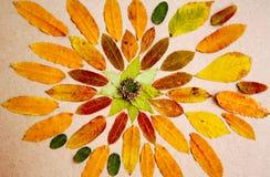 Hand - gemaakte die mandala van droge bladeren en installaties wordt gemaakt Royalty-vrije Stock Afbeelding