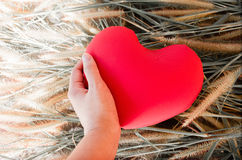 Hand gently raise up red heart from grass flower for love and careness concept background Royalty Free Stock Photography