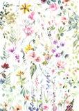 Hand geschilderde waterverfbloemen en installaties op witte achtergrond royalty-vrije stock afbeeldingen