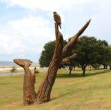 Hand geschnitzte hölzerne Eagles-Statue Lizenzfreies Stockbild