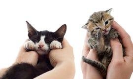 In hand gestreepte katkatje Royalty-vrije Stock Foto
