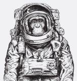 Hand Getrokken Aapastronaut Vector royalty-vrije illustratie