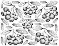 Hand Getrokken Achtergrond van Blauwe Lilly Pilly Fruits royalty-vrije illustratie