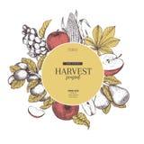 Hand getrokken banner met de vruchten en de groenten van de de herfstoogst Vectorwijnoogst gegraveerde stijl Apple, druif, graan, Royalty-vrije Stock Afbeelding