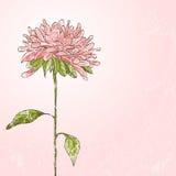 Hand getrokken bloem Stock Afbeelding