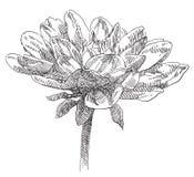 Hand getrokken bloem Royalty-vrije Stock Foto