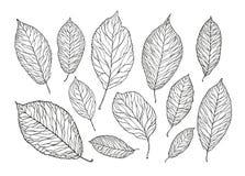 Hand getrokken boombladeren Aard, gebladerteschets Decoratieve vectorillustratie royalty-vrije illustratie