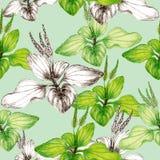 Hand getrokken botanisch naadloos patroon van weegbreeinstallatie vector illustratie