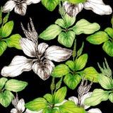 Hand getrokken botanisch naadloos patroon van weegbreeinstallatie royalty-vrije illustratie