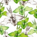 Hand getrokken botanisch naadloos patroon van weegbreeinstallatie royalty-vrije stock afbeelding