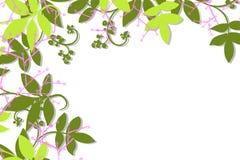 Hand getrokken bovenkant en linkerkantgrens van groene wijnstokken en bladeren en lavendelbessen stock illustratie