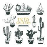 Hand getrokken cactussen en succulent Stock Fotografie