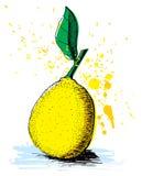 Hand getrokken citroen Stock Foto's