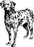 Hand getrokken Dalmatische hond Royalty-vrije Stock Foto's