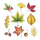 Hand getrokken de herfstbladeren royalty-vrije illustratie