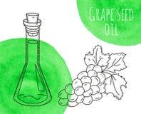 Hand getrokken de oliefles van het druivenzaad met groene waterverfvlekken Royalty-vrije Stock Fotografie