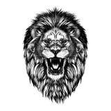 Hand getrokken die schets van leeuwhoofd in zwarte op witte achtergrond wordt geïsoleerd royalty-vrije illustratie