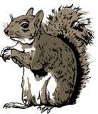 Hand Getrokken Eekhoorn Stock Illustratie