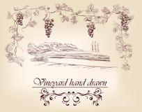 Hand getrokken etiketwijngaarden Stock Afbeelding