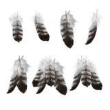 Hand getrokken geplaatste adelaarsveren Royalty-vrije Stock Foto's