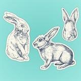 Hand getrokken geplaatste konijnen Pasen bunnyes Geplaatste stickers stock illustratie