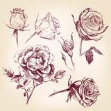 Hand getrokken geplaatste rozen Stock Fotografie