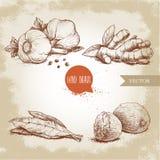 Hand getrokken geplaatste schetskruiden Knoflooksamenstelling met peterselie, gemberwortel, baaibladeren en nutmegs Kruiden, spec royalty-vrije illustratie