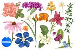 Hand getrokken geplaatste tuinbloemen vector illustratie