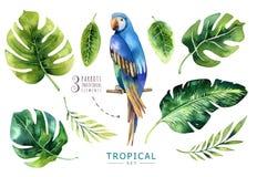 Hand getrokken geplaatste waterverf tropische installaties en papegaai Exotische pa Royalty-vrije Stock Afbeelding