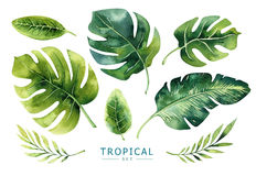 Hand getrokken geplaatste waterverf tropische installaties Exotische palmbladen, j Royalty-vrije Stock Afbeeldingen