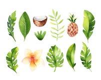 Hand getrokken geplaatste waterverf tropische installaties Exotische palmbladen, wildernisboom, tropische de plantkundeelementen  Stock Afbeeldingen