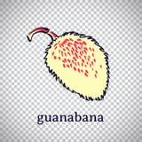 Hand getrokken gestileerde guanabana Vectorfruit dat op transparante achtergrond wordt geïsoleerd Grafische illustratie voor emb royalty-vrije illustratie