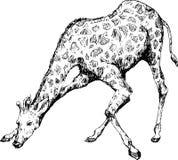 Hand getrokken giraf Stock Afbeelding