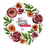 Hand getrokken granaatappelsamenstelling De vector kleurde gegraveerde illustratie Sappig natuurlijk fruit Voedsel gezond ingredi stock illustratie