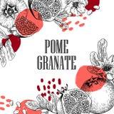 Hand getrokken granaatappelsamenstelling Vector gegraveerde illustratie Sappig natuurlijk fruit Voedsel gezond ingrediënt voor vector illustratie