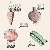 Hand getrokken groentenillustratie Royalty-vrije Stock Afbeeldingen