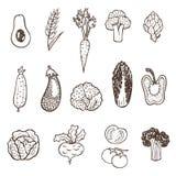 Hand getrokken groenteninzameling Vector Illustratie