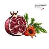 Hand getrokken halve granaatappel en bloem De vector graveerde gekleurde illustratie Sappig natuurlijk fruit Gezond voedsel stock illustratie