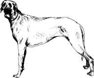 Hand getrokken hond Royalty-vrije Stock Foto