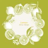 Hand getrokken illustratie met citrusvruchten vector illustratie