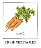 Hand getrokken illustratie van geïsoleerde wortel Stock Fotografie