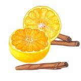 Hand getrokken illustratie van sinaasappel met kaneel stock foto