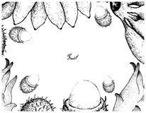 Hand Getrokken Kader van Verse Vruchten op Witte Achtergrond Royalty-vrije Stock Afbeeldingen
