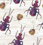 Hand getrokken Kevers op houten achtergrond Naadloos patroon Stock Afbeeldingen