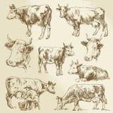 Hand getrokken koeien Stock Afbeeldingen